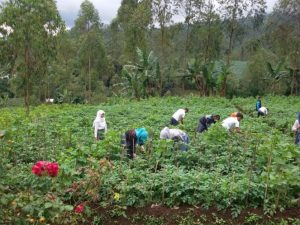 290371_praktik-siswa-smk-pertanian-sarimukti-garut_663_498