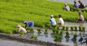 perlindungan-sosial-petani